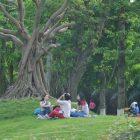 Cẩm nang dã ngoại ở Ecopark.