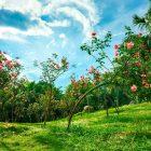 Tháng ba, hoa gọi xuân về Ecopark