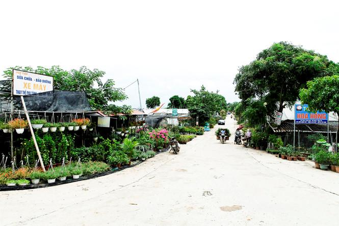 Ngỡ ngàng làng hoa trẻ Xuân Quan