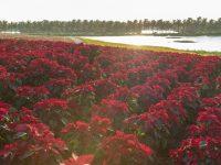 Không thể bỏ lỡ lễ hội Xuân tại công viên sinh thái ven hồ lớn nhất miền Bắc dịp Tết này