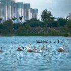Người Hà Nội đổ xô đến Ecopark ngắm hoa, chèo thuyền Kayak