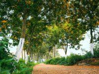 Vì sao không khí tại Ecopark đạt chuẩn?