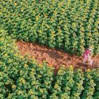 """Lướt mỏi tay loạt ảnh check-in """"thật là vàng tươi"""" của giới trẻ ở vườn hoa hướng dương mới xuất hiện ngay gần Hà Nội, không đi nhanh kẻo phí cả mùa hè"""