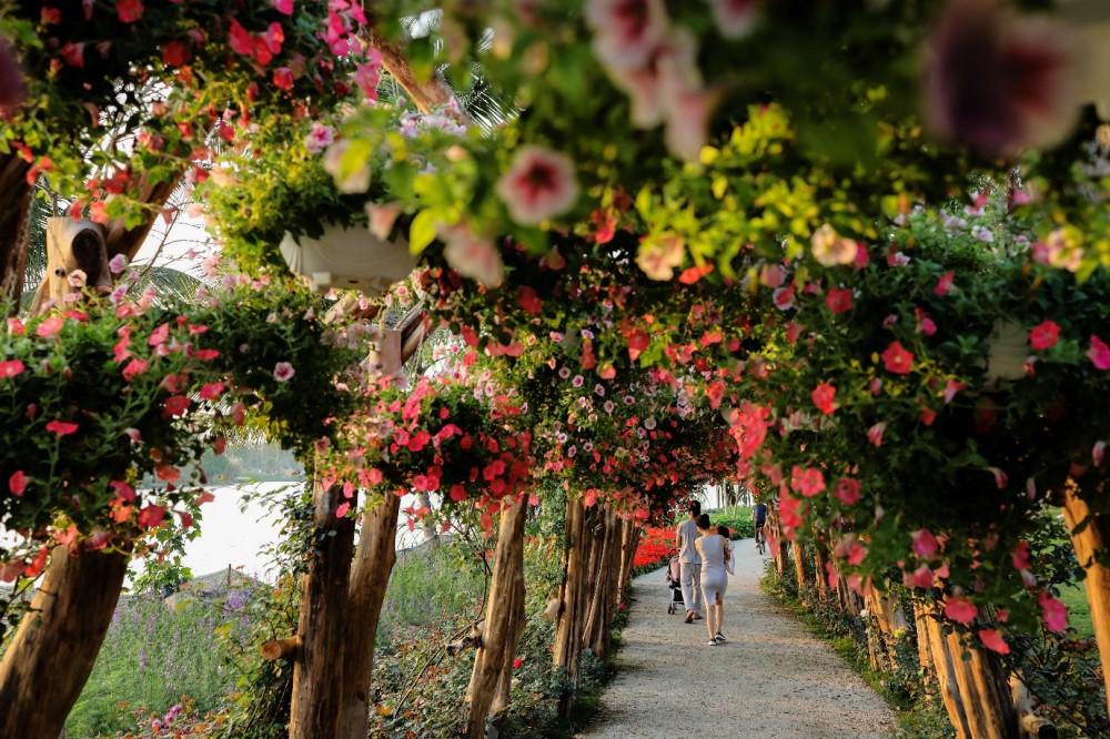 Ngập tràn sắc màu Tết 2020 trong lễ hội hoa ngay gần Hà Nội