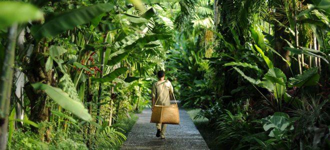 Thiên đường nghỉ dưỡng tựa Bali giữa lòng Ecopark